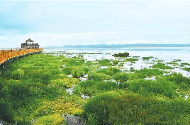 守护母亲河 建设幸福河——推动黄河流域生态保护和高质量发展系列报道② 保护草原,让母亲河青春永驻