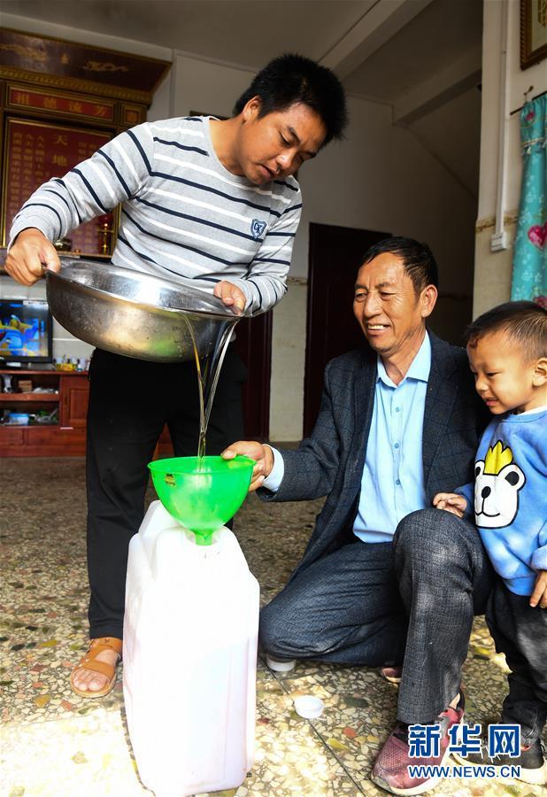 (经济)(4)广西凌云:低产油茶改造助农脱贫