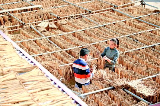 定西岷县:中药材产业助农增收