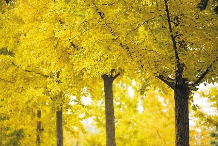 初冬到田河来看叶
