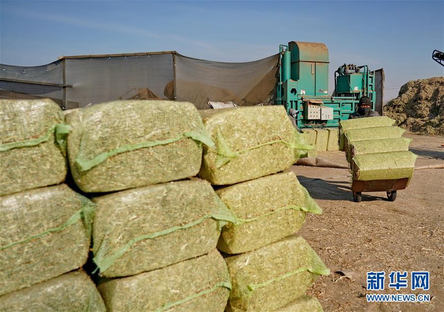 (社会)(2)河北滦州:秸秆回收变废为宝