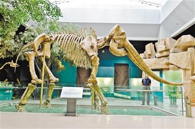 200万年前,一头渴坏了的老象陷入了淤泥……