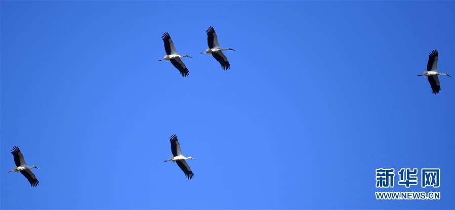 (环境)(1)天津北大港:候鸟家园