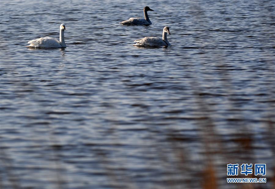 (环境)(3)天津北大港:候鸟家园