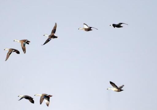 天津北大港:候鸟家园