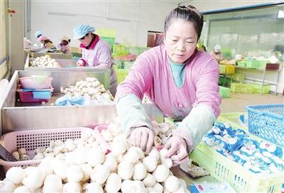 临夏州永靖县因地制宜推进产业扶贫