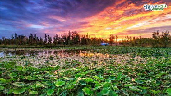 甘肃湿地绘丹青