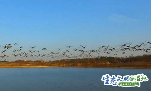 """【生态文明@湿地】小山村迎来成群候鸟 """"护鸟公约""""成村民共识"""