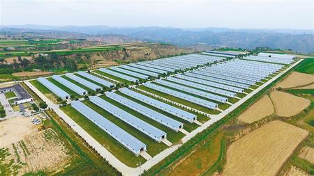 庆阳环县:肉羊产业拓富路