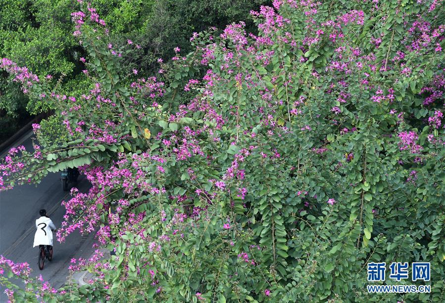 (环境)(3)广西南宁:花开在冬季