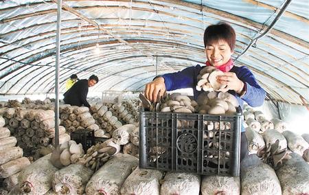 庆阳市西峰区特色产业形成气候