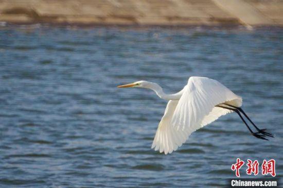 甘肃黄土塬生态环境持续好转 引越冬候鸟逐水栖居