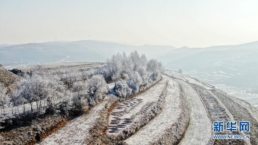 冬日黄土高原雾凇美景,你见过吗?