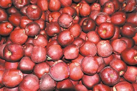 【脱贫攻坚奔小康】苹果飘香惹人醉 农民敲开幸福门 ——礼县倾力打造苹果富民产业的背后