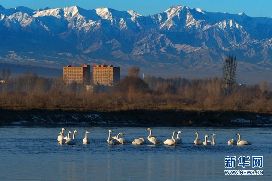 冬日祁连山下呈现人鸟和谐共生自然画卷