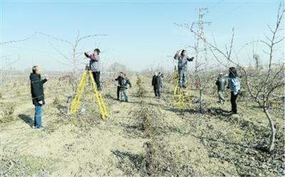 临夏州农科院组织技术人员深入和政县