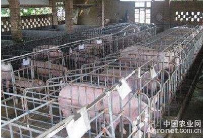 甘肃省出台政策稳定生猪生产