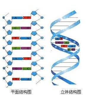 17年前命案遗留物检出DNA 警方比对两大姓氏三千余人破案