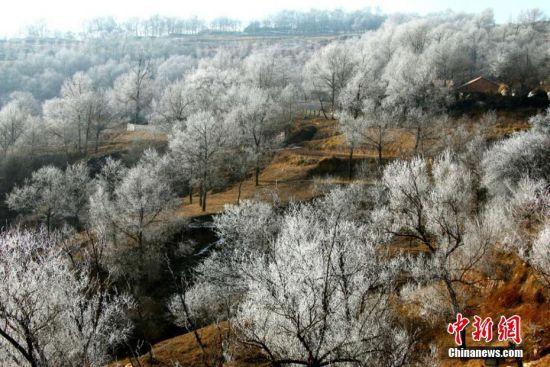 美丽的雾凇把山峦装扮成一片白色的童话世界。赵继宗 摄