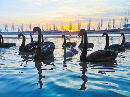 张掖湿地 候鸟天堂