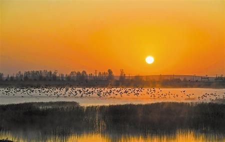 生态优美 百鸟翔集