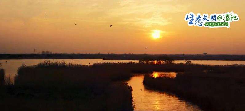 【生态文明@湿地】湿地美景惹人醉 鸟儿枝头来筑巢