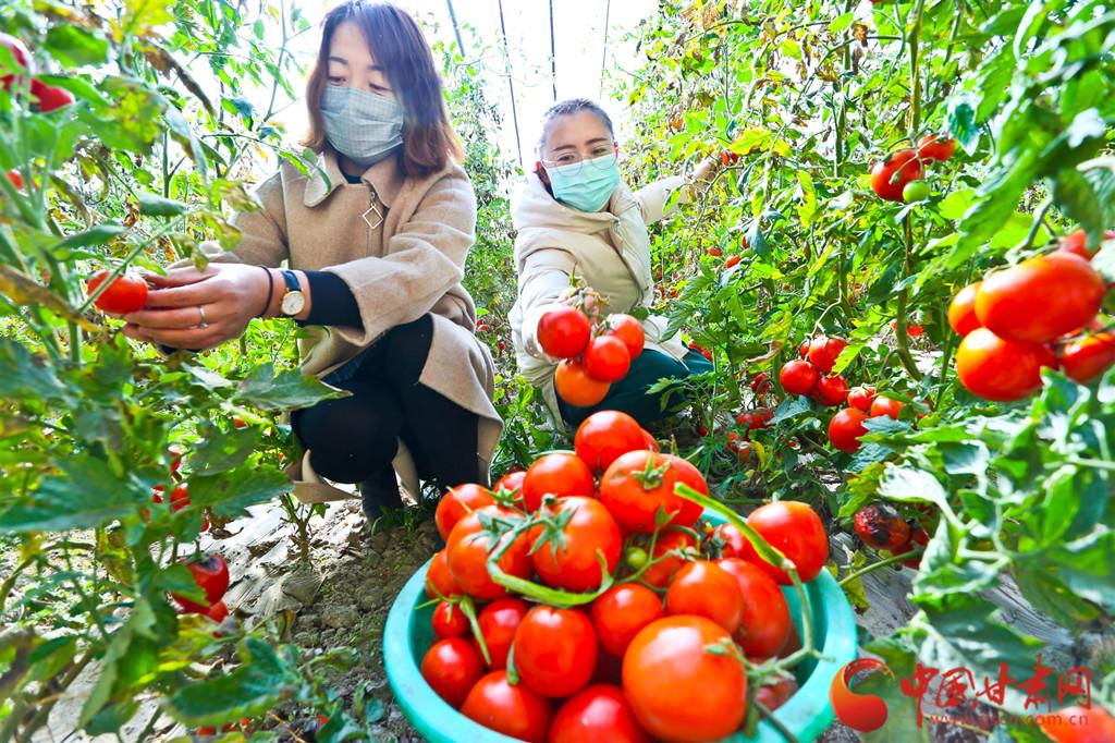 """【甘肃全民战""""疫""""】张掖蔬菜驰援疫区 日供100多吨(组图)"""
