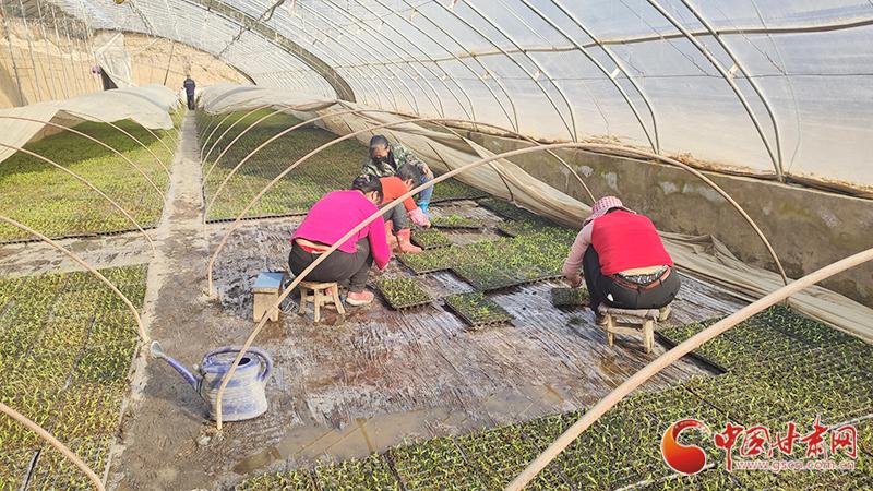 """【甘肃全民战""""疫""""】灵台:疫情防控农业生产两不误(图)"""