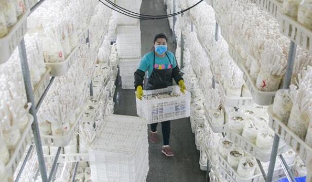 贵州大方:山区企业复工忙