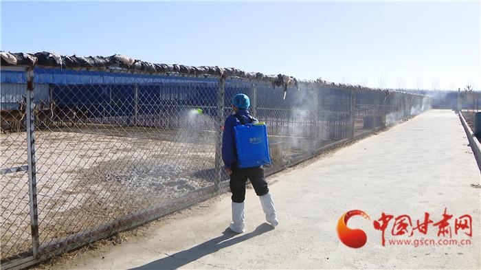 """【甘肃全民战""""疫""""】张掖甘州区:动物防疫督促养殖场无死角消毒"""