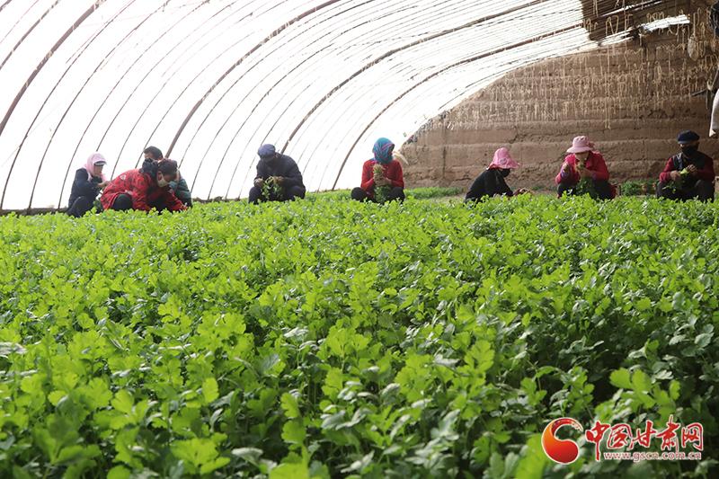 """【甘肃全民战""""疫""""】临泽县:防疫生产两不误 大棚蔬菜促增收"""