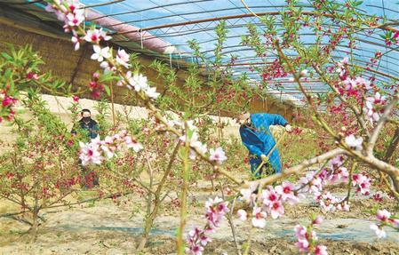 张掖山丹县:紧抓春耕农业生产不放松(图)