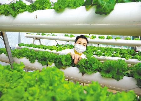 陇南市成县:春耕生产有序开展