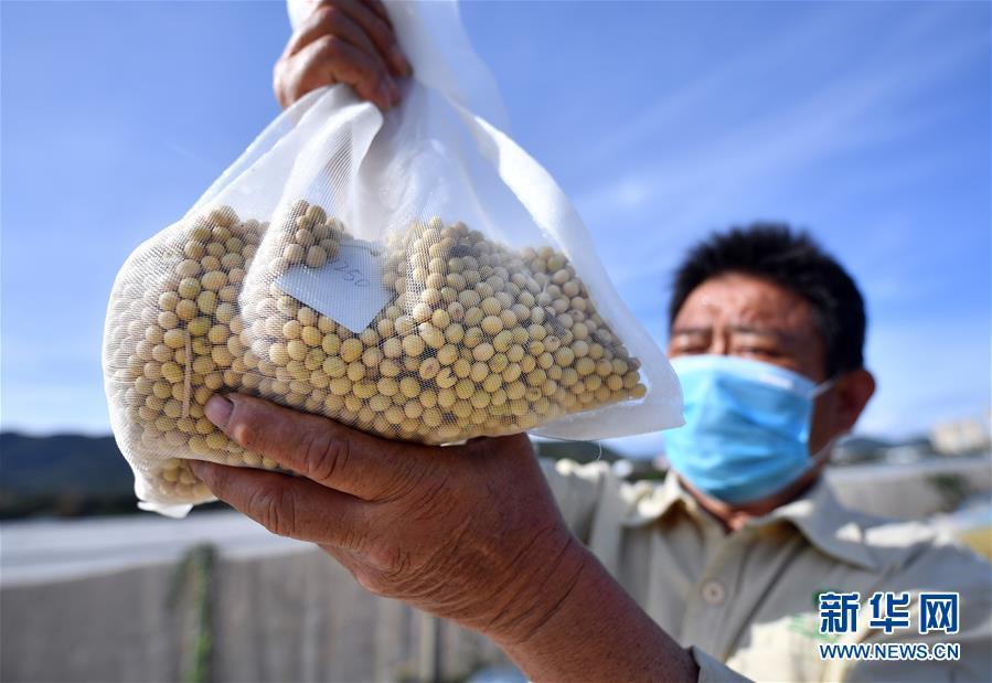 (科技)(2)海南三亚:多措并举  保障南繁科研工作