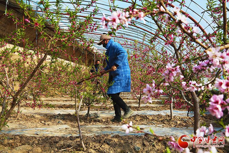 张掖山丹:发展戈壁农业 助力乡村振兴