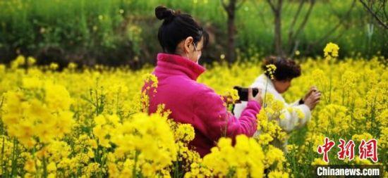 图为游人在油菜花丛中赏花、拍照。 邱建林 摄