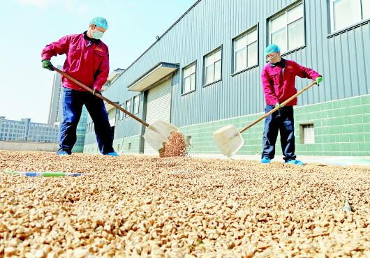 定西陇西县:开足马力复工复产全力保障药品供给