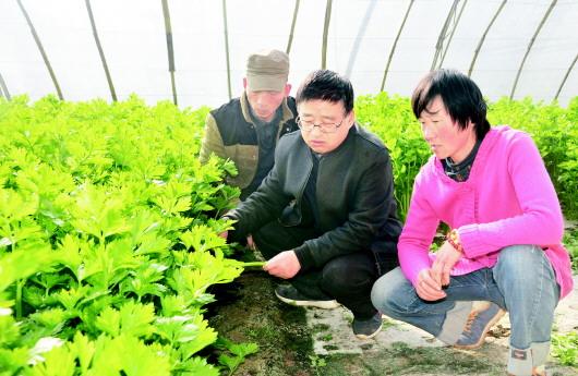 定西:防疫生产两不误蔬菜大棚春意浓