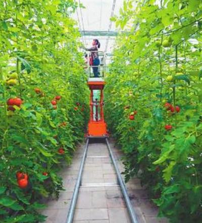 甘肃省将创建一批省级现代农业产业园 兰州新区和榆中县现代农业产业园名列其中