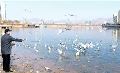 临夏州永靖县黄河三峡湿地吸引了大批候鸟栖息