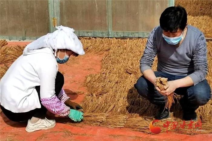 """定西岷县:抢抓农时种药忙 战""""疫""""战贫两不误"""