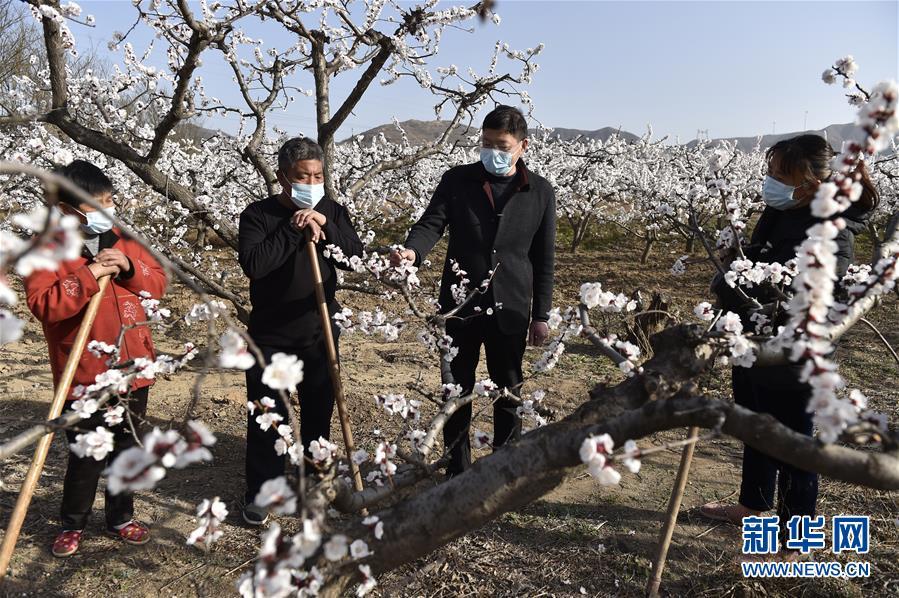 (社会)(5)山西:春暖花开 不误农时