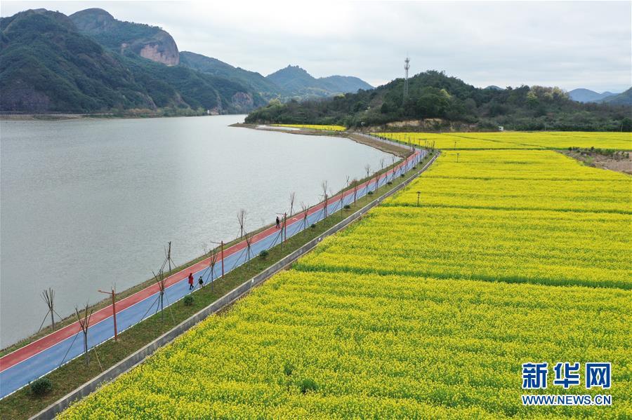(生态)(3)油菜花开布谷湖