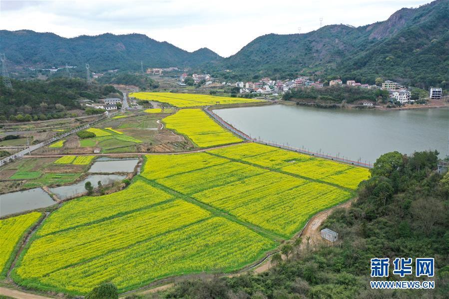 (生态)(4)油菜花开布谷湖