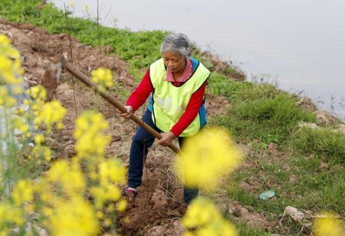 重庆潼南:义务植树护河堤