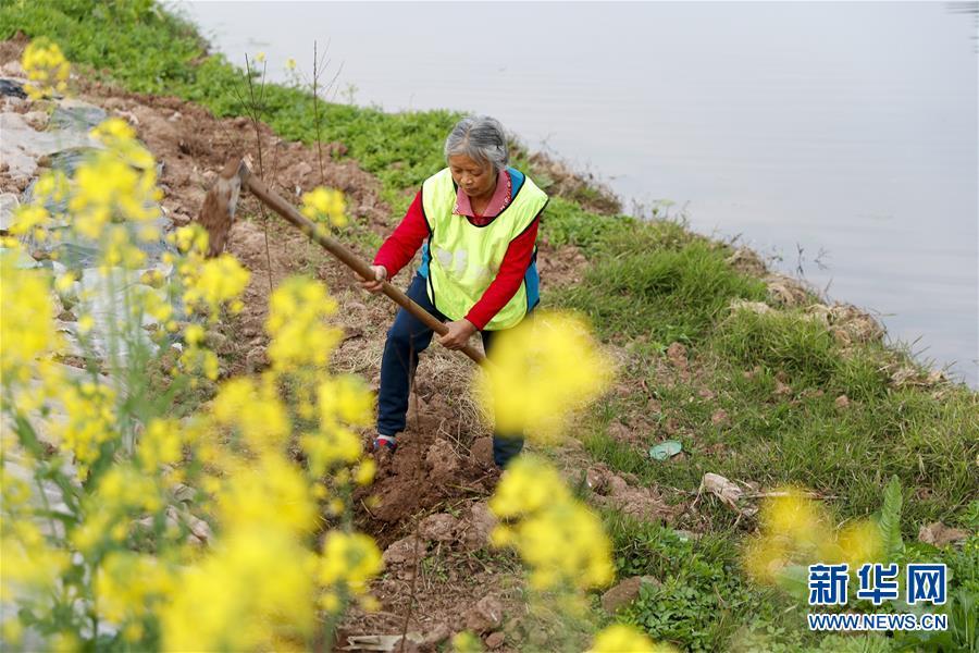 (环境)(1)重庆潼南:义务植树护河堤