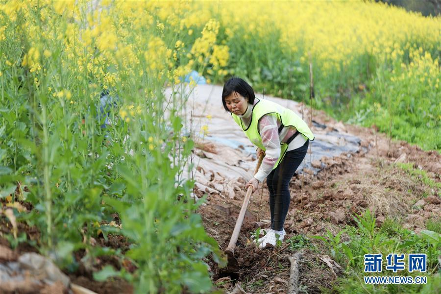 (环境)(2)重庆潼南:义务植树护河堤