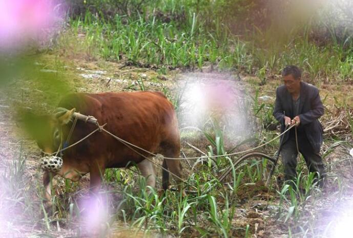 广西:春来农事忙