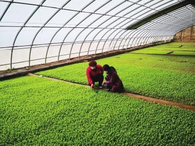 """兰州榆中县:农业科技培训""""花样""""多"""