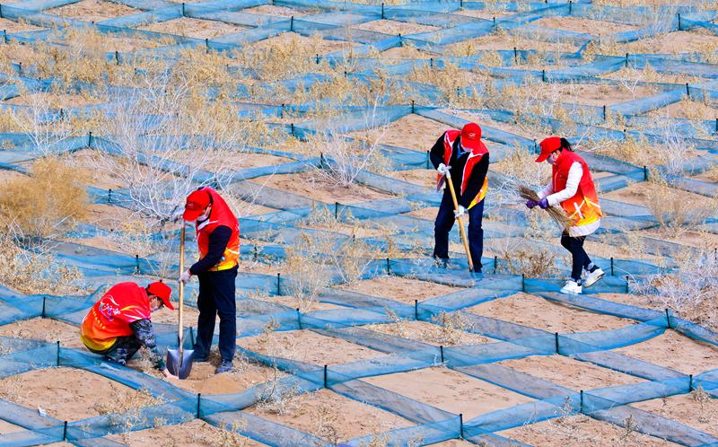 甘肃张掖:春种梭梭阻黄沙(组图)